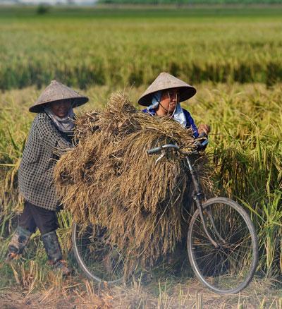 (Hình minh họa: Hoang Dinh Nam/AFP/Getty Images)