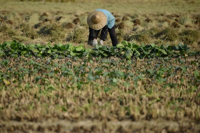Đoàn Thanh Liêm – Tuyên Ngôn Của Nông Dân TQ Về Vấn Đề Đòi Lại Ruộng Đất