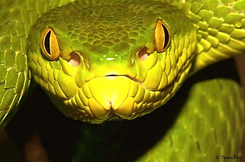 Bàn tay bí mật nào gây ra đại nạn rắn độc cắn người trên 10 tỉnh Việt Nam?