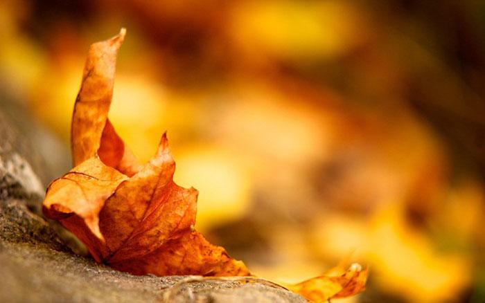 Chùm thơ tình mùa thu – Phạm Ngọc Thái