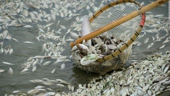 Image result for Nạn Hán Hóa mông, mãn, tạng hồi...